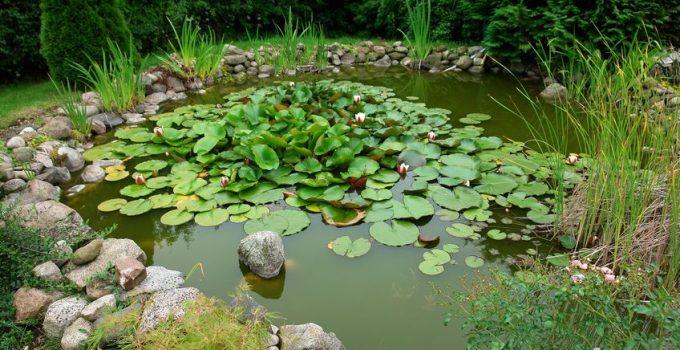 Goldfish Pond Garden