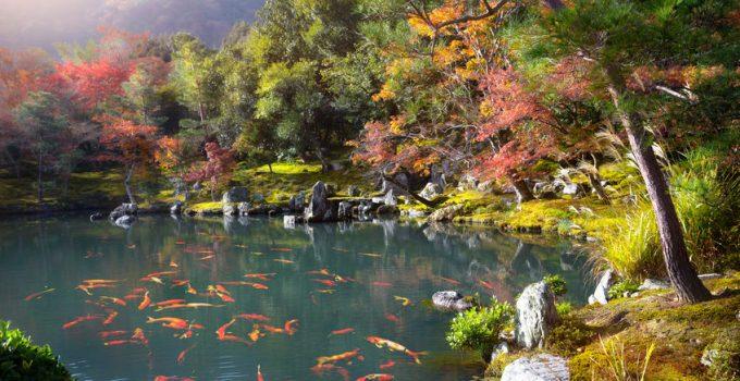 best pond liner material